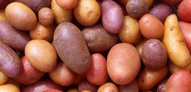 Små og mellomstore poteter ligger i en haug