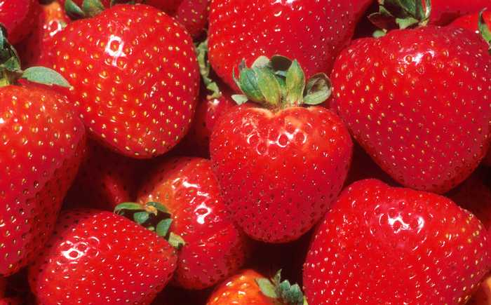 Mange modne jordbær ligger samlet