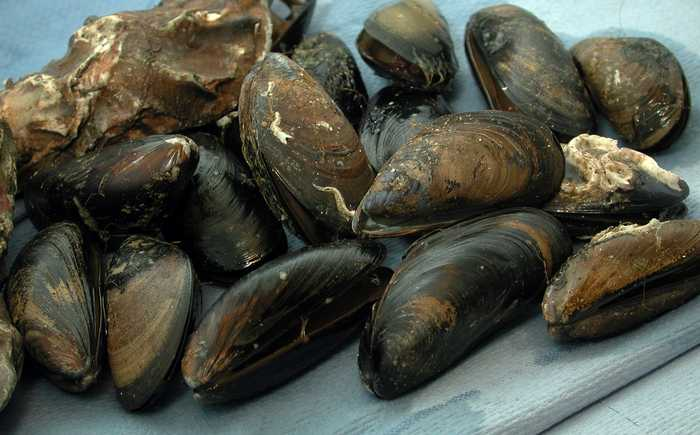 Blåskjell og østers ligger på et pledd