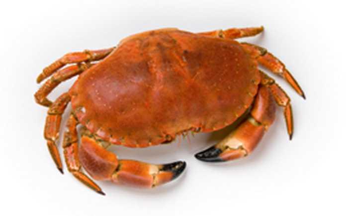 En krabbe