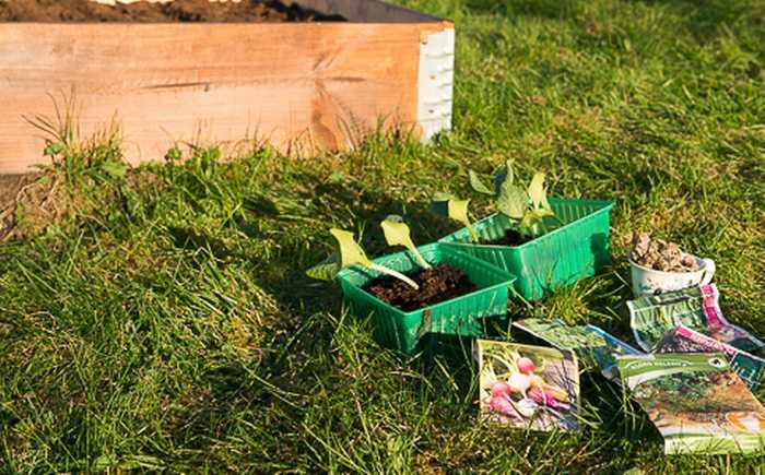 Planter og frø på en gressplen klare til å bli satt i kjøkkenhagekassen.