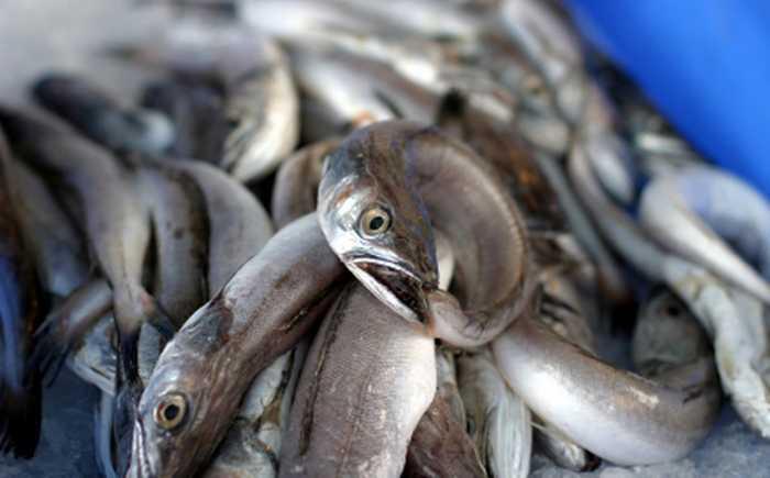 Fisk som ligger på is