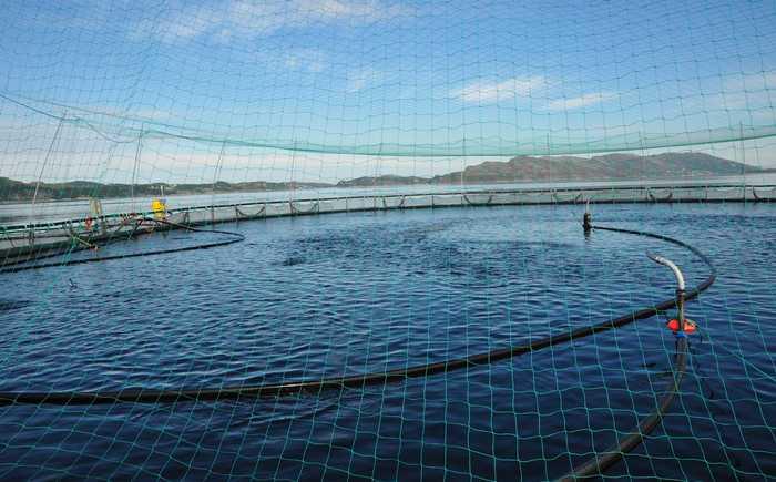 Oppdrettsmerd med automatisk fôring av fisk